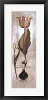 Framed Tulipa Violoncello V