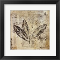 Framed Botanical Sketchbook I