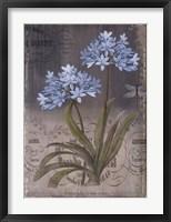 Framed Black Botanical II
