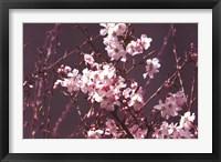 Framed Spring Blossom - Purple