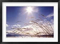 Framed Winter Grass