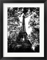 Framed Paris Trees