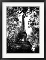 Framed Paris Trees