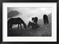 Framed Morning Mist
