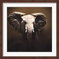 Framed On Safari