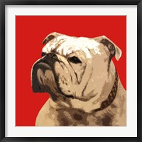 Framed British Bulldog, Red
