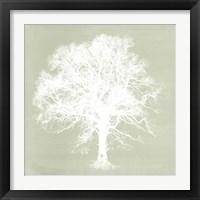 Framed Dream Tree III