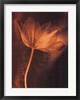 Bronze Tulip II Framed Print