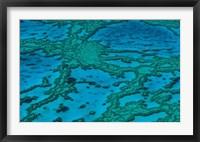 Framed Grande Barrire de Corail