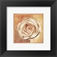 Framed Warm Rose II