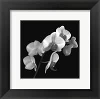 Framed Orchid Illusion I