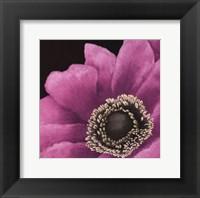 Framed Brilliant Blooms II