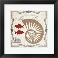 Framed Pacific Nautilus