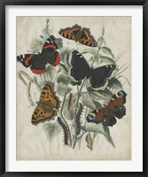 Framed Butterfly Haven I