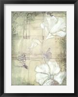 Poppy Whisper I Framed Print