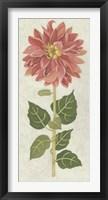 Non-Embellished Dahlia I Framed Print