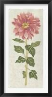 Non-Embellished Dahlia II Framed Print