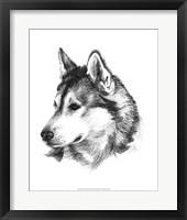 Framed Canine Study III