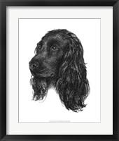 Framed Canine Study IV