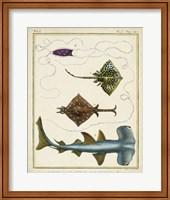 Framed Antique Rays & Fish I