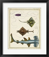Antique Rays & Fish I Framed Print