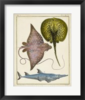 Antique Rays & Fish II Framed Print