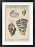 Framed Vintage Shell Study II