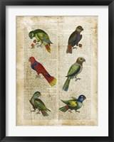 Antiquarian Parrots I Framed Print