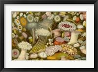 Framed Sea Anemone Panorama
