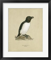 Framed Antique Penguin I