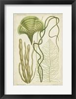 Framed Seaweed Specimen in Green II