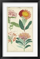Framed Spring Blooms III