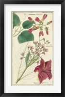 Framed Spring Blooms IV