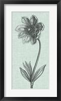 Framed Celadon Beauty II