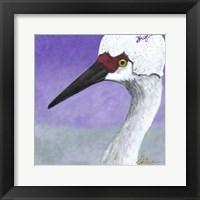Framed You Silly Bird - Abbe