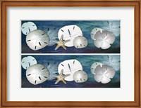 Framed 2-Up Sanddollars