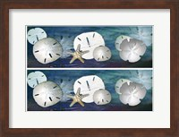 Framed 2-Up Sanddollars