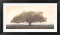 Framed Oak in the Fog