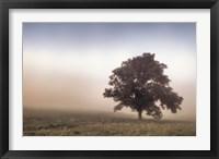 Framed Paradise Haze