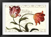 Framed Tulipa Botanica I Cream