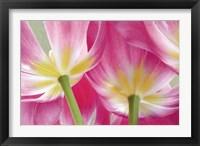 Framed Tulip Garden