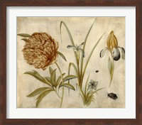 Framed Flowers and Beetles