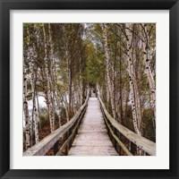 Framed Path Home