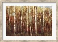 Framed Birch Forest