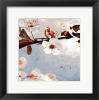 Framed Blossom Morning I