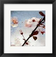 Framed Blossom Morning 2