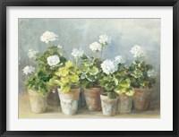 Framed White Geraniums
