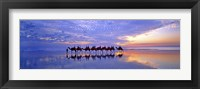 Framed Cable Beach Camels