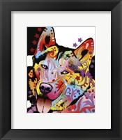 Framed Siberian Husky 1