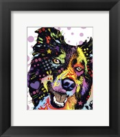 Framed Border Collie 1